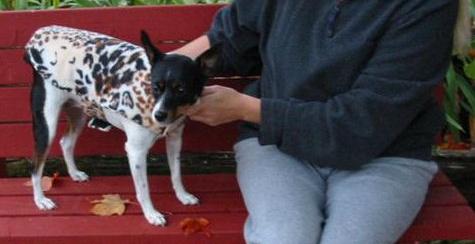 Dog Vest Tip – Getting a Custom Fit